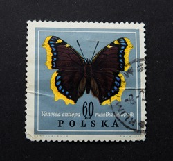 Lviv Ukraine - September 16, 2017; The Polish postage stamp, around 1967, depicts a fish, is shot on a black background