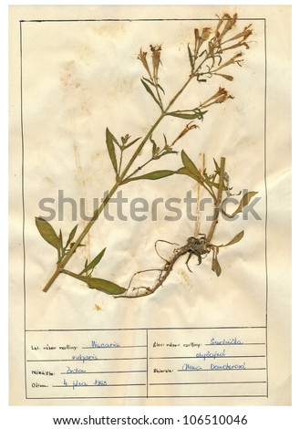 Lychnis viscaria, the sticky catchfly,is a flowering plant in the family Caryophyllaceae.It is an upright perennial,growing to 60 cm in height.It gets its English name from the stickiness of its stem.