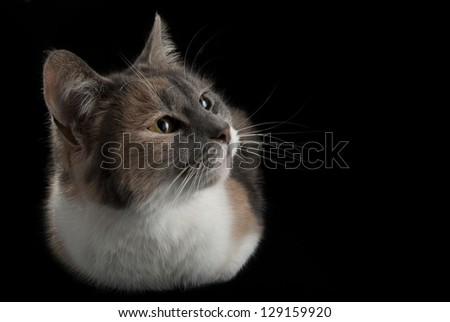Lying cat watching on isolated black background #129159920