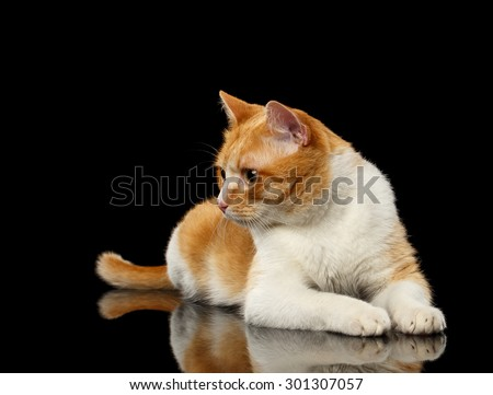 Lying Ginger Cat Surprised Looking at Left on Black Mirror background