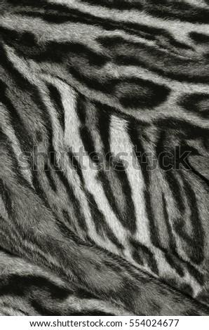 lynx fur texture background #554024677