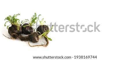 Maca. Peruvian fresh black Maca in white background Zdjęcia stock ©