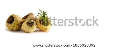 Maca Peruvian. Withe Maca in with background  Zdjęcia stock ©