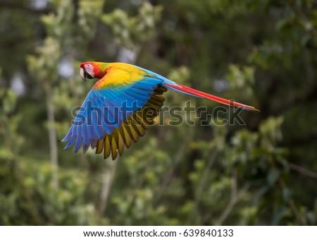 Shutterstock Macaw