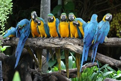 Macaw colorful