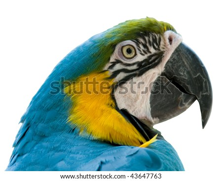 Macaw Cut Out