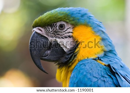 Macaw in Costa Rica