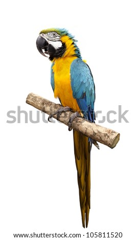 Stock Photo Macaw parrot isolated on white background