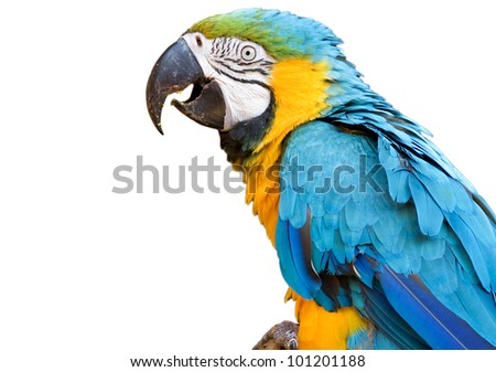 Macaw parrot with yellow and blue feathers - isolated on white background