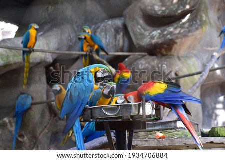 Macaw parrots are eating meals in the zoo , eating macaws, macaws are eating foods in the zoo, macaw eats fruits, A hungry parrot eating the nut, macaw arara brazilian bird eates seed