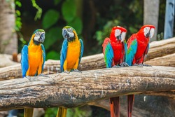 macaw parrots with blur background