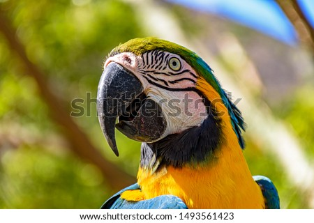Macaw perched on a branch with vegetation of the Brazilian rainforest behind #1493561423