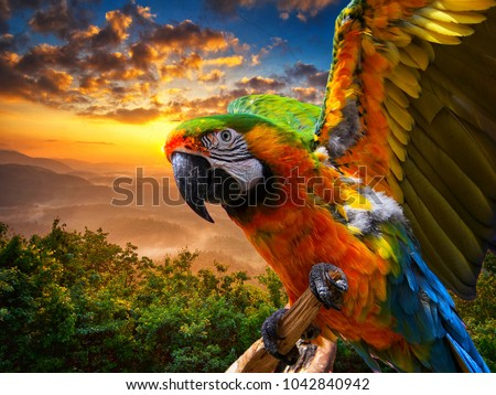 Macaw sitting on a branch . Beautiful colorful parrot in nature habitat with sunset background