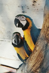 Macawshave long tail feathers as well as big beaks.Macawadaptations include large, curved, powerful beaks designed to crack open hard nuts and seeds.
