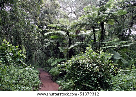 machame trail near the machame gate in the kilimanjao national park