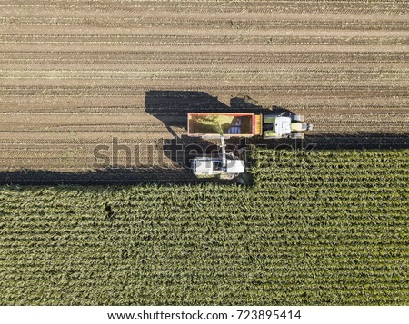 Machines harvesting corn in the field. Aerial drone shot.