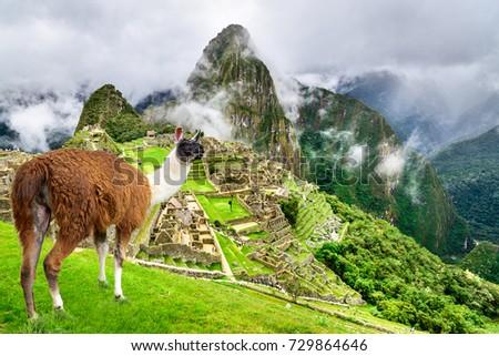 Machu Picchu, Peru - Ruins of Inca Empire city and Llama animal, in Cusco region, amazing place of South America. #729864646