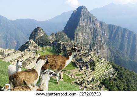 Machu Picchu site with standing lama herd from above. Machu Picchu ruins in Peru are UNESCO World Heritage and one of the worlds most famous cult sites.  #327260753