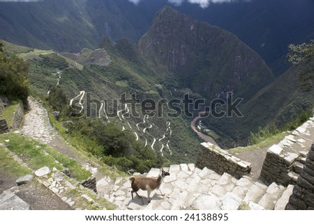 Machupicchu, high up in the Peruvian Andes. Aerial View with llama in foreground.