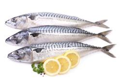 Mackerel fish on white background
