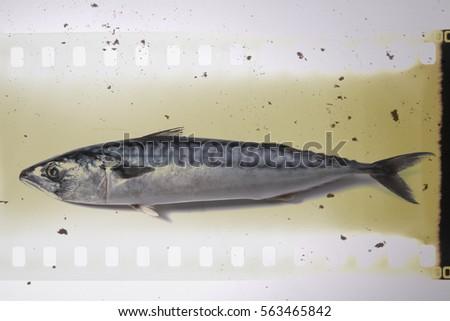 Mackerel Fish  over retro background