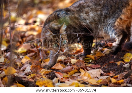 Mackerel tabby cat with green eye in autumn leaves #86981594
