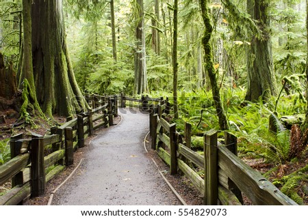 MacMillan Provincial Park is a provincial park on Vancouver Island in British Columbia, Canada. The park is home to a famous, 157 hectare stand of ancient Douglas-fir, known as Cathedral Grove. #554829073