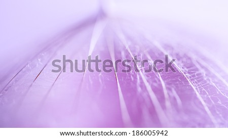 Macro, abstract composition with dandelion seed
