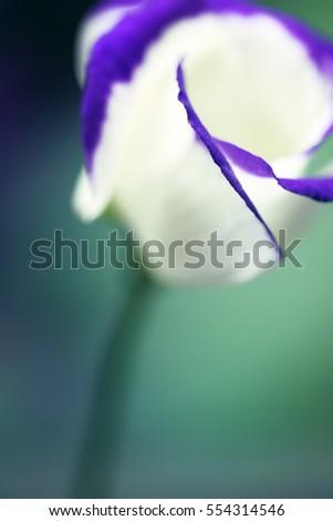 Macro Art Abstract. Flower in macro. #554314546