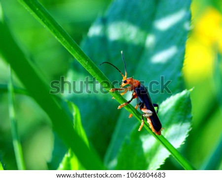 Macro. Beetle sits on the grass on a summer day #1062804683