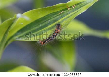 macro caterpillars is being activity #1334035892