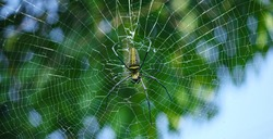 Macro close up detail of Nephilinae spider web, colorful vivid of white yellow orange red grey and black color with nature background. Spider sitting on web