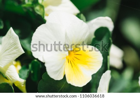 Free photos white flowers with yellow center avopix macro close up of a small white flower with yellow centre 1106036618 mightylinksfo