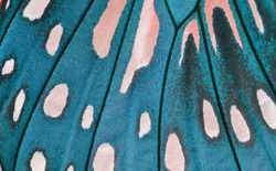 Macro close up of an Monarch Butterfly Wing