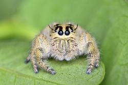 Macro close-up photography jumping spider