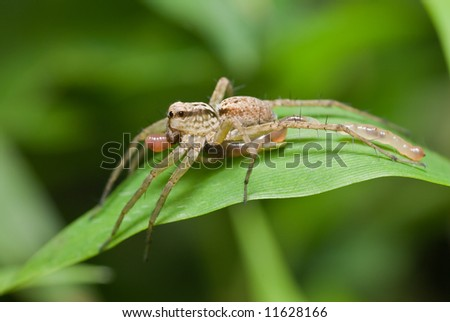 Macro/close-up shot of a wolf spider with its prey - a worm