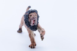 Macro close up toy male Smilodon saber-toothed roaring and in attack position with white background