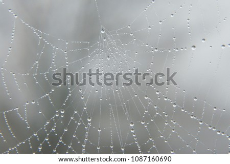macro closeup of sparkling rain dew drops on a spider mesh web cobweb resembling beautiful jewelry