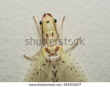 macro closeup of strange moth insect