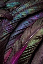 Macro Closeup of the Colorful Details and  Texture of the Feathers of a Bird