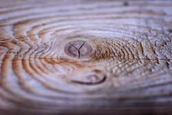 macro closeup of tree stump with knot and tree rings