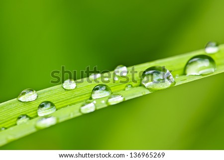 Macro closeup of water drops on green grass blade