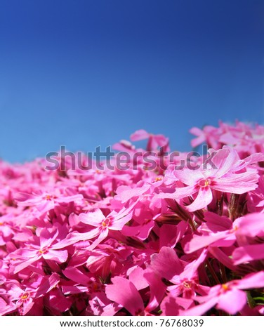 macro detail of purple flower isolated over blue sky, summer time is comming