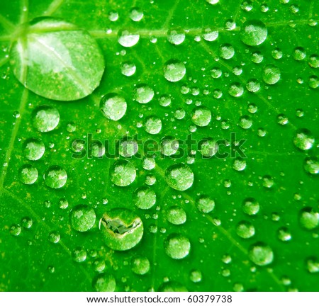 Macro detail of water drops on green leaf