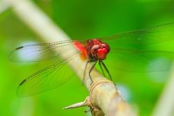 Macro Dragonfly-Dragonfly