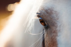 macro eye, close photo eyes brown horse, horse looks, brown eyes, look ahead, detail