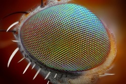 Macro fly compound eye surface at extreme x25 magnification. Very sharp