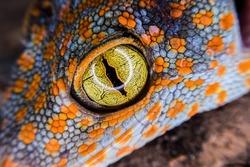macro gecko eye for detail
