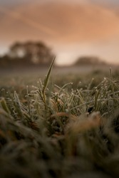Macro grass with frost