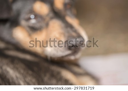 Macro half face of sadness black dog while injury with blurred animal abstract background